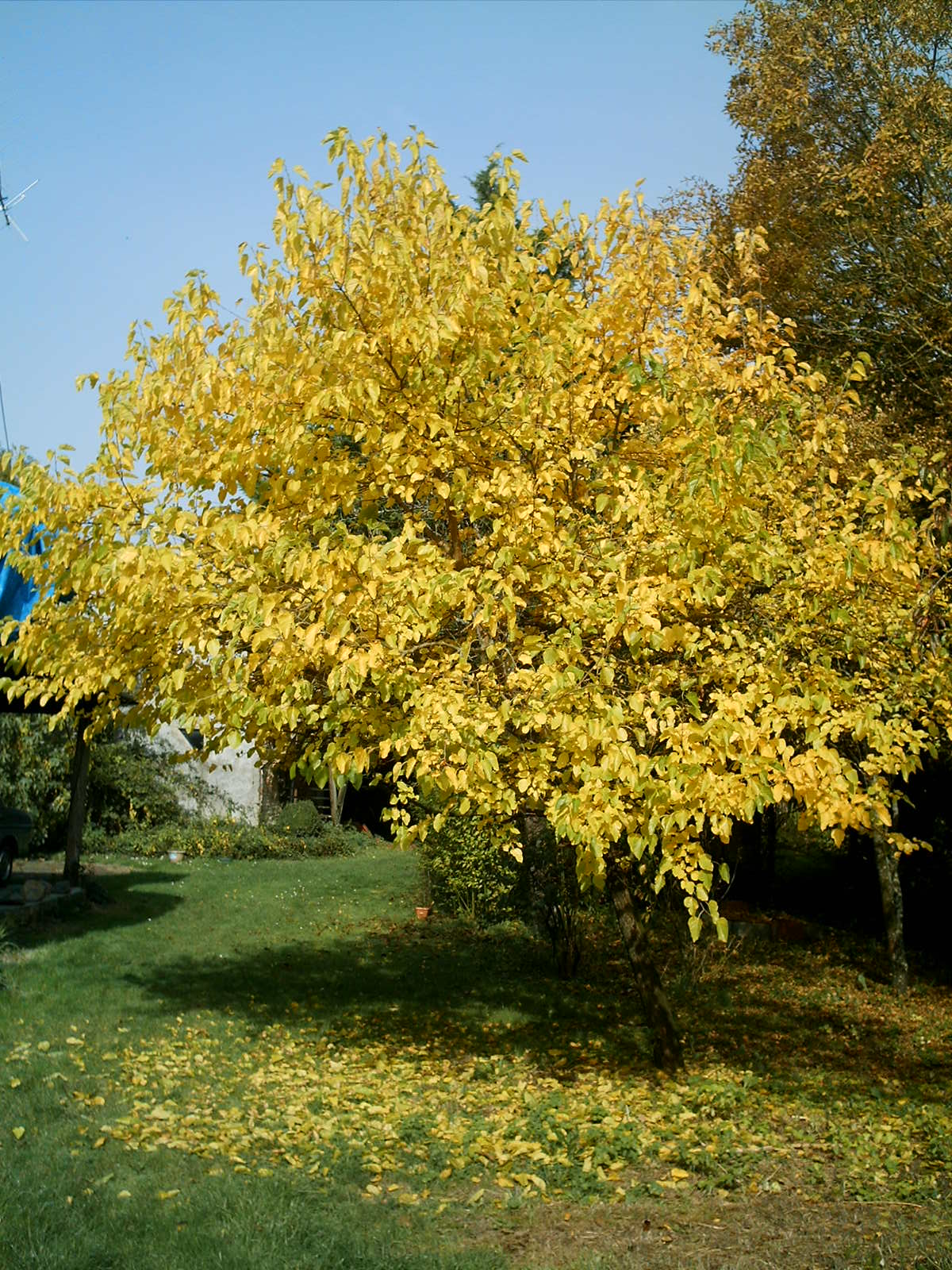 Quel est cet espoir qui fait pousser l'arbre Fe0uv41k